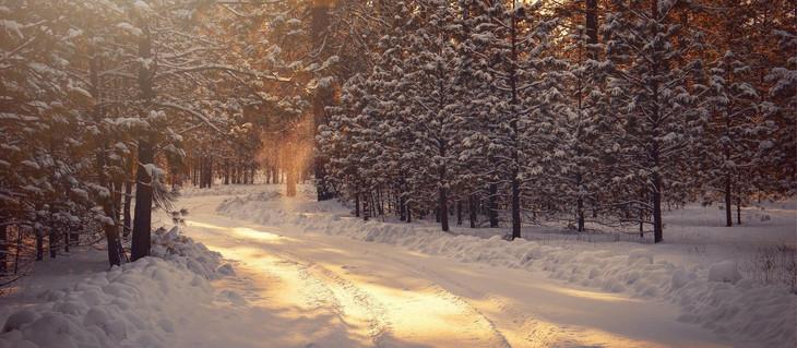 Mildmay's Prayer Diary Winter 2020