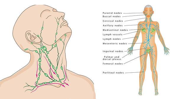 drain-lymphatic-system-make-lymphatic-sy