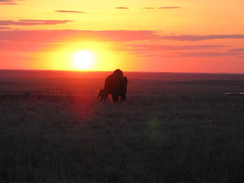 Cow-Calf Sunset-min.JPG