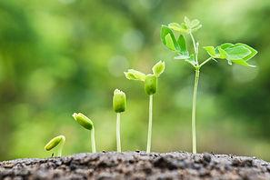 growing_plant.jpg