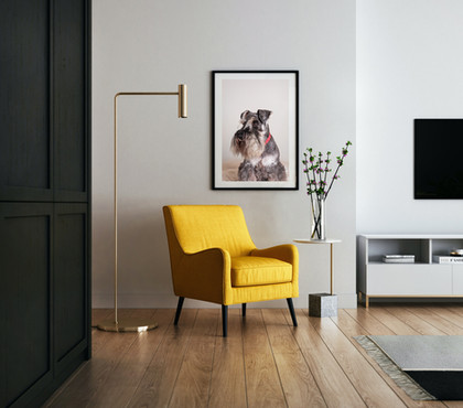 Yellow_Chair_Schnauzer.jpg