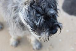 20150821_dogs_elwood8648.jpg
