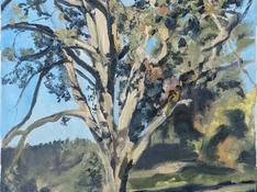 Old Oregon Oak