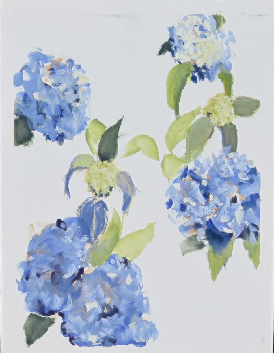 Bleue Hydrangeas