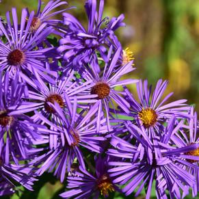 5 Native Perennials For Your Garden