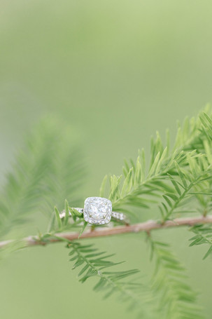 engagement ring on tree branch at milham park kalamazoo michigan
