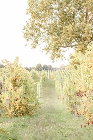 Engagement photos Round Barn Winery Baroda Michigan vineyard