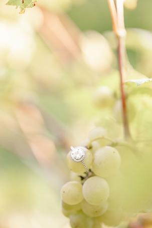 Engagement photos Round Barn Winery Baroda Michigan engagement ring on grapes in vineyard