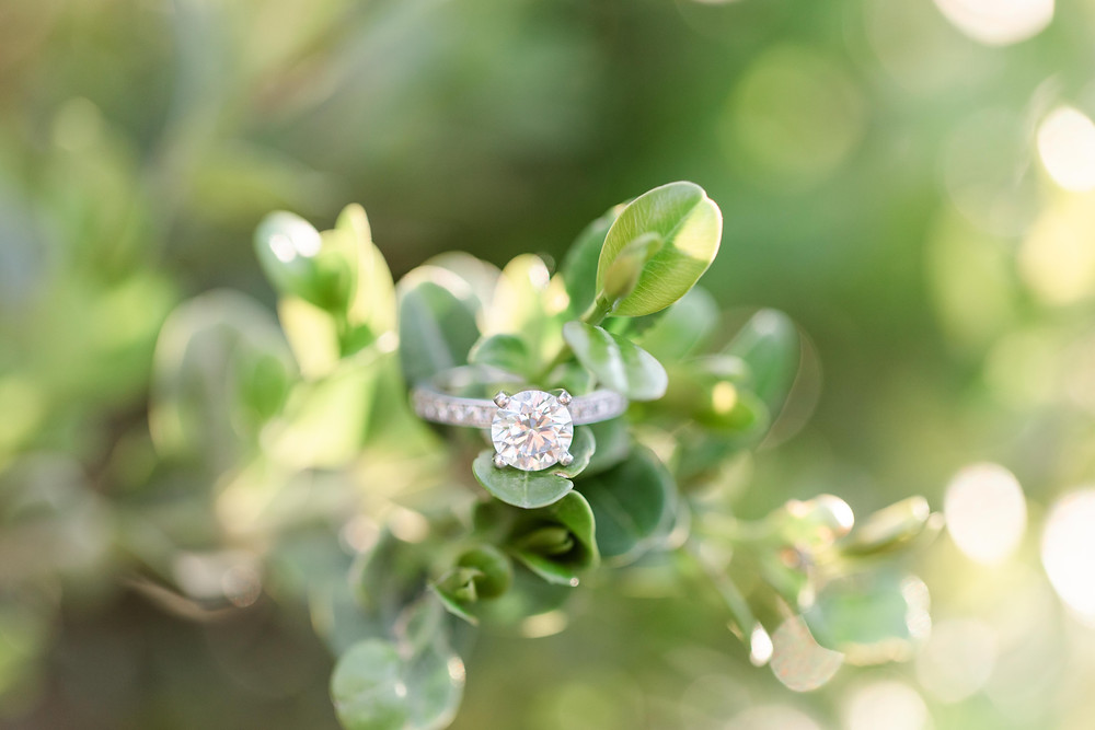 engagement ring on green bush near The Tridge Midland Michigan