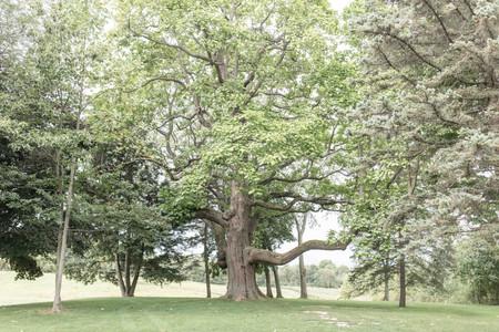 hidden vineyard wedding barn tree