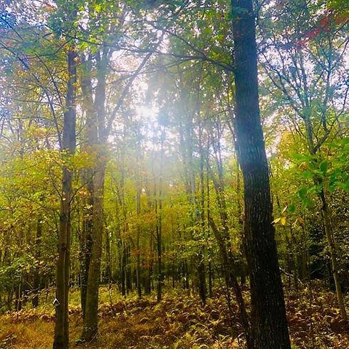 Somewhere in the Pocono mountains..jpg