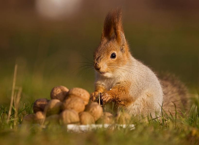 Take Control of Your Life- Squirrel Style