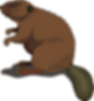 beaver-48437_1280.png