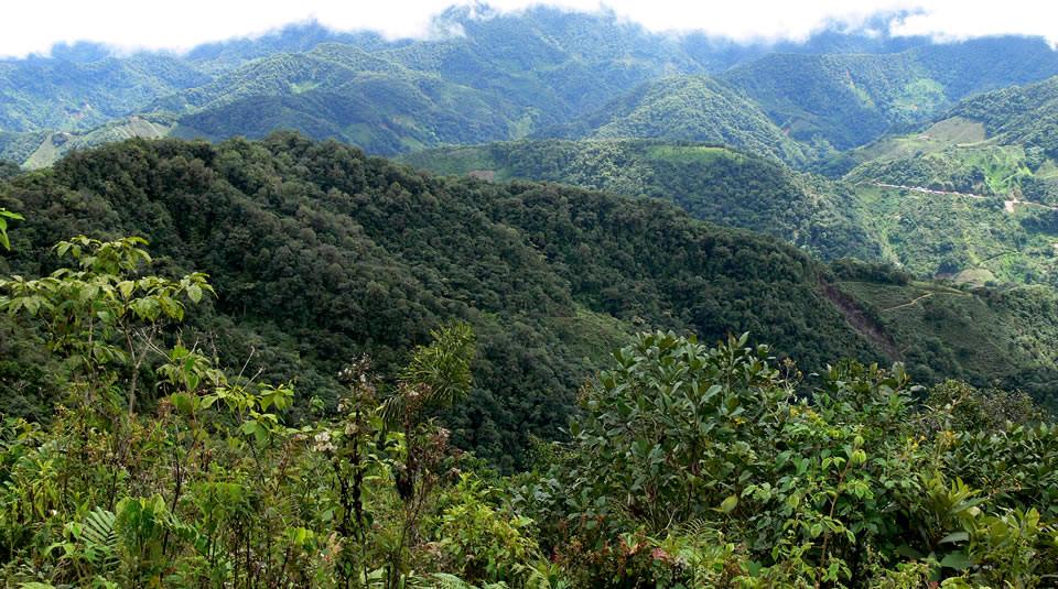 Parque Nacional Natural Munchique. / Foto: www.parquesnacionales.gov.co