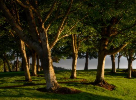 Morning Light, Sequim, Washington
