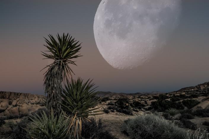 Yucca Moon