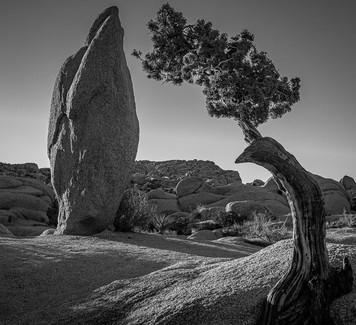 JoshuaT Tree NP