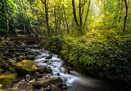 Gorge Creek, Columbia Gorge