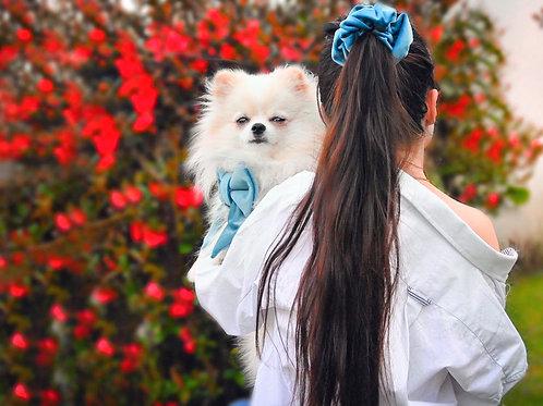 """Noeud papillon pour chien """"Velour bleu"""""""