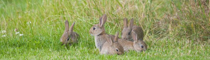 rabbitsbanner