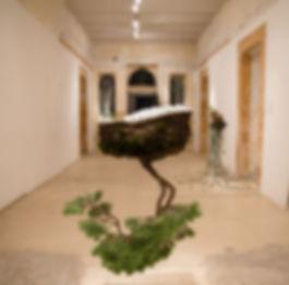 disconnected medium - hanging tree.jpg