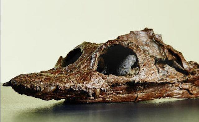The Luxembourg Plesiosaur