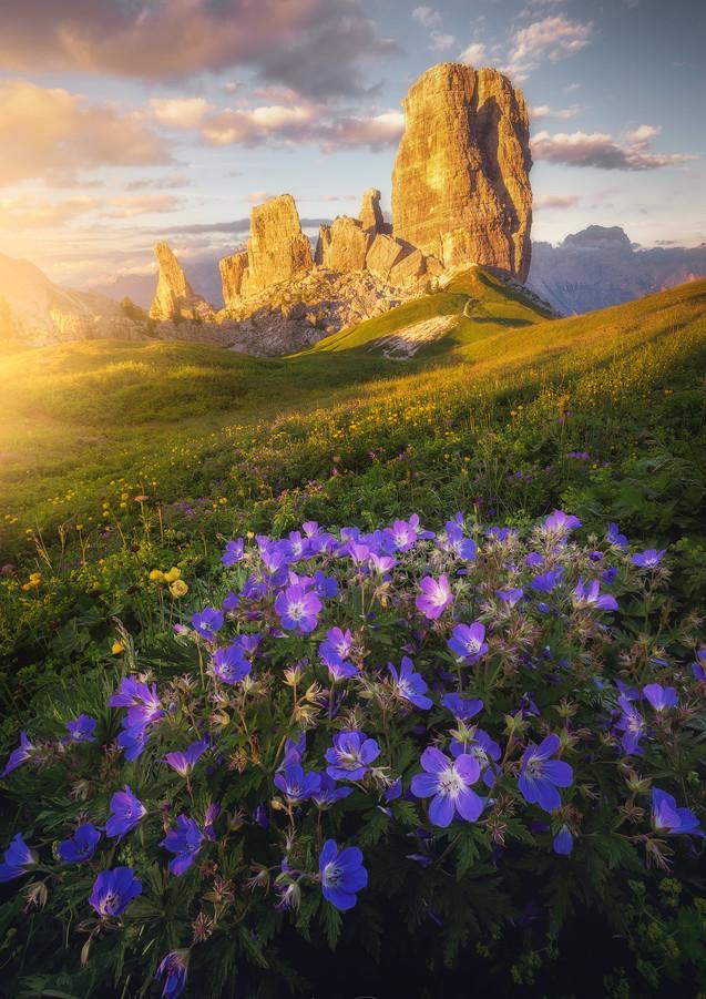 """""""Meadow Dreams"""""""