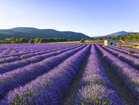 Investir dans un programme immobilier en Provence : découvrez les Résidences Bleu Lavande