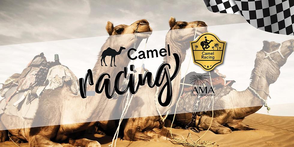 Gosford Camel Races