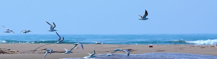 Birding in Bocca di Serchio