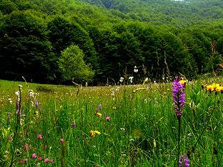 Escursioni da Sogno - Escursioni Naturalistiche