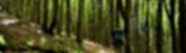 Traversata foreste casentinesi
