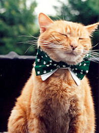 7-cat-1.jpg