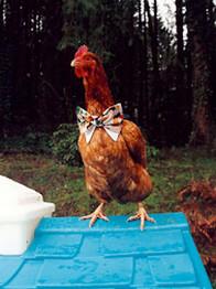 7-chick.jpg