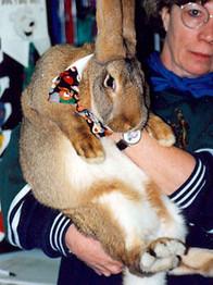 7-rabbit.jpg