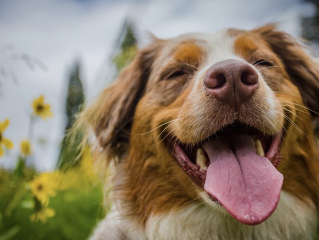 9 Things to do in Pembrokeshire with Dogs