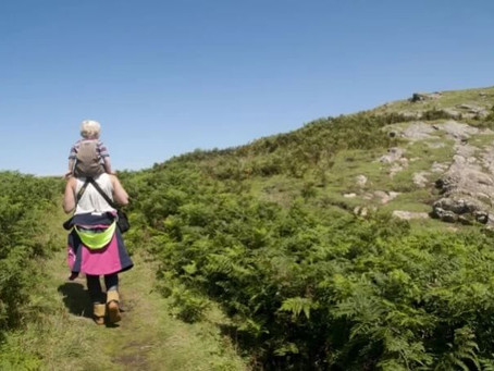 4 Reasons to Visit Skomer Island this Summer
