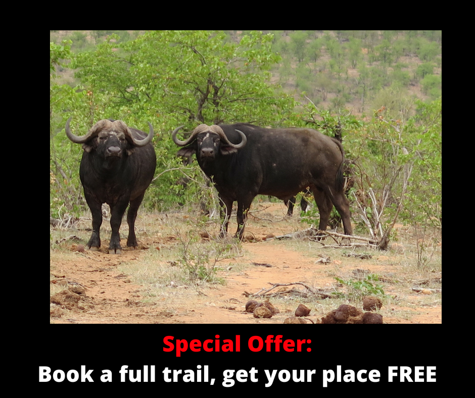 walking safari, walking safaris, kruger park walking safari, african safari, luxury safari, tailor made safari