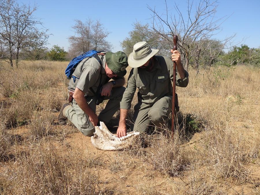backpacking, walking safari, walking safaris, kruger park walking safari, african safari, luxury safari, tailor made safari,