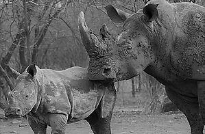 leadership development, team development, walking safari, walking safaris, self development safari, wellness safari, kruger park walking safari, african safari, adventure safari, luxury safari, tailor made safariafari, luxury safari, tailor made safari