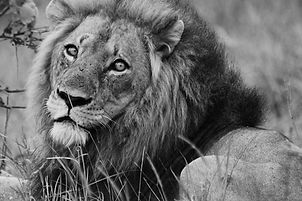 leadership development, team development, walking safari, walking safaris, self development safari, wellness safari, kruger park walking safari, african safari, adventure safari, luxury safari, tailor made safari