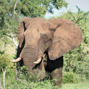 Safari News 7