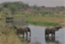 walking safari, walking safaris, kruger park walking safari, african safari, luxury safari, tailor made safari, custom safari