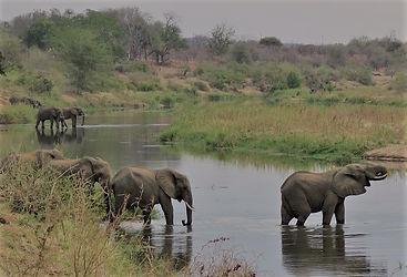 walking safari, walking safaris, self development safari, wellness safari, kruger park walking safari, african safari, adventure safari, luxury safari, tailor made safari