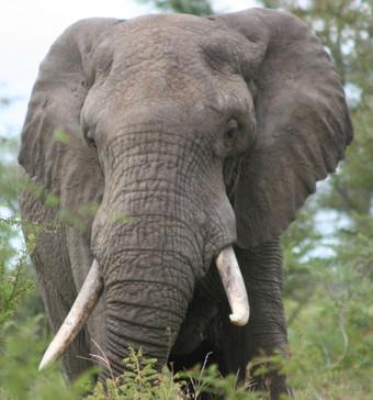 walking safari, walking safaris, self development safari, wellness safari, mindfulness retreat, leadership retreat, kruger park walking safari, african safari, adventure safari, tailor made safari