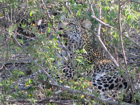 walking safari, walking safaris, kruger park walking safari, african safari, luxury safari, tailor made safari, adventure