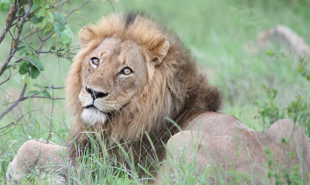walking safari, walking safaris, kruger park walking safari, african safari, luxury safari, tailor made safari, african lion