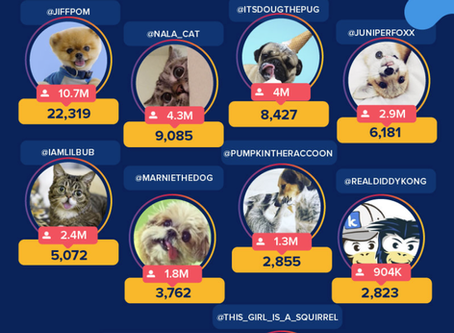 Meet the Pets Earning Over £22,000 PER POST on Instagram
