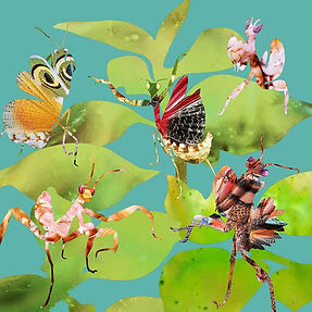 card mantises   low res.jpg