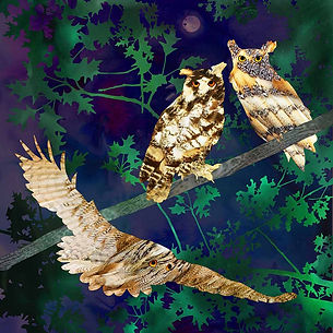b owls print 25x25cm low res.jpg